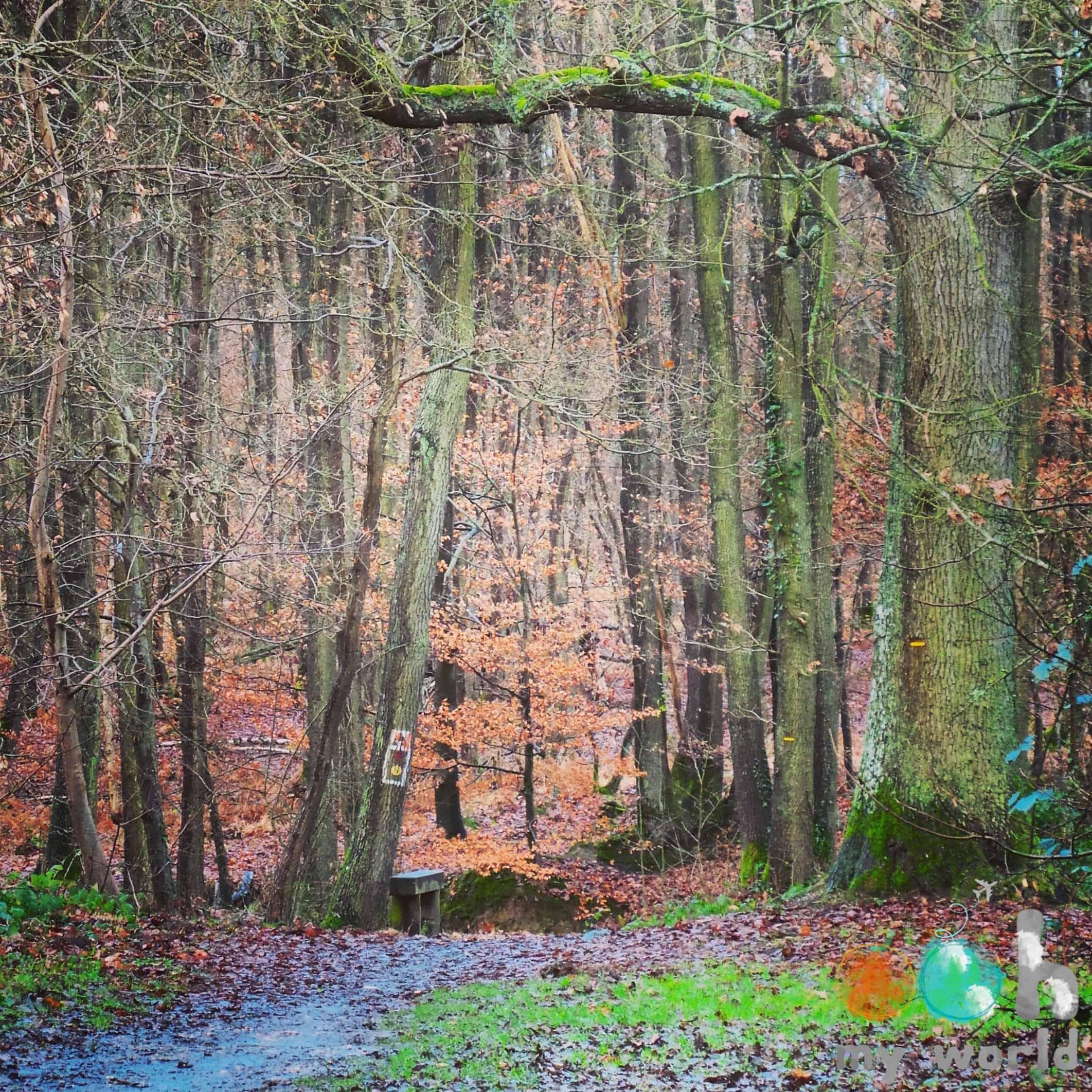 Le Bois St Michel - Evreux