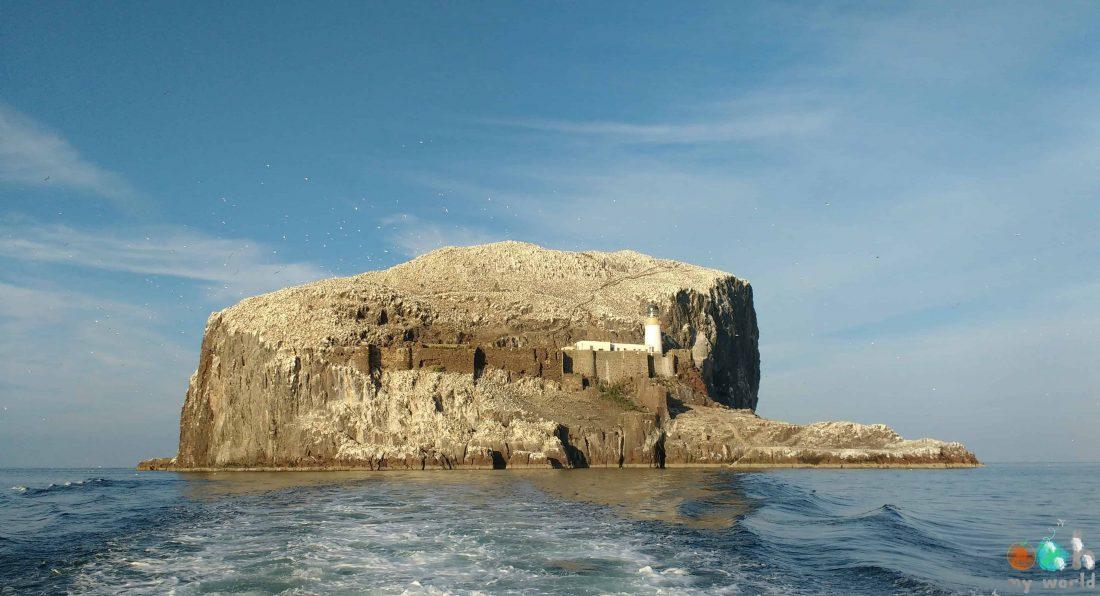 Rocher de Bass Rock et sa colonie de fous de bassan