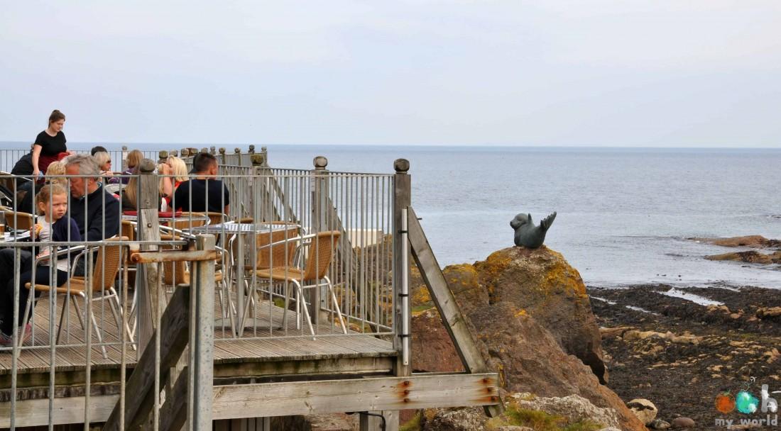 Terrasse du Centre des oiseaux marins d'Ecosse