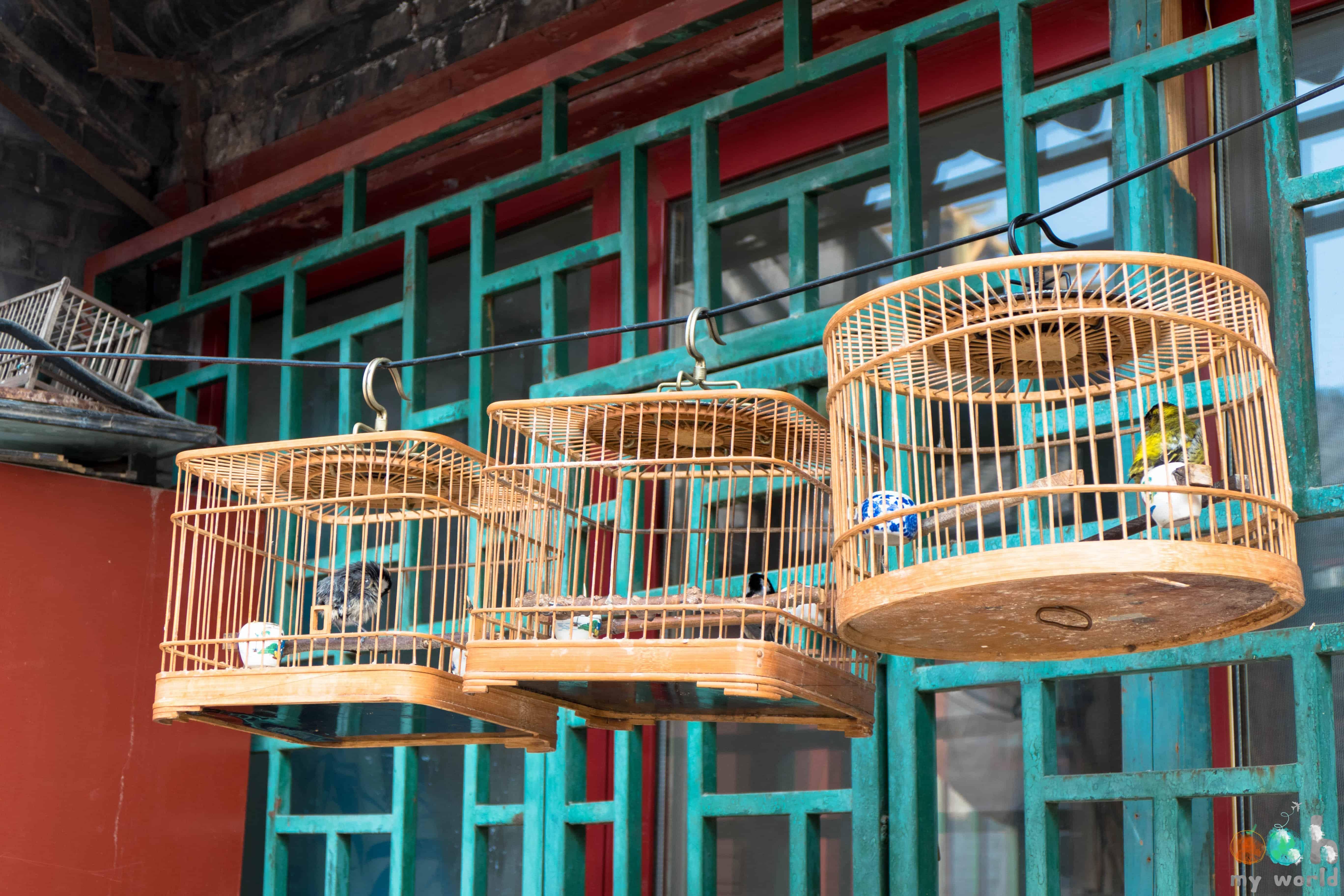Les cages à oiseaux pékinoises