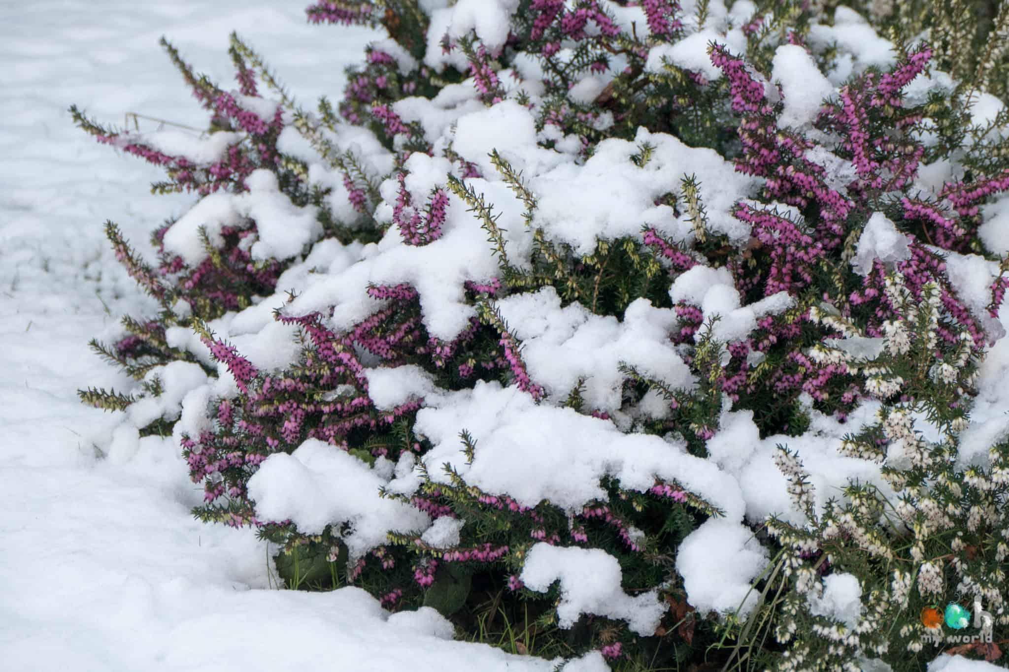 Neige dans les bruyères en Ecosse